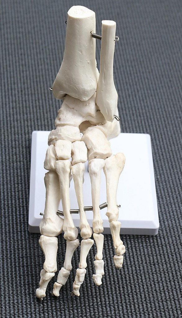 Life Size Foot Joint Anatomical Model Skeleton Educational Pvc