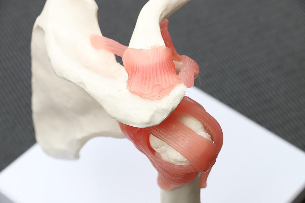 Life Size Shoulder Joint Anatomical Model Skeleton