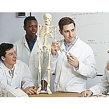 Anatomical 85cm Tall Human Skeleton with Flexible Spine Model - Medical Anatomy