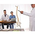 Life Size Flexible Vertebral Spine Pelvis & Femur Skeleton Model Anatomy Model